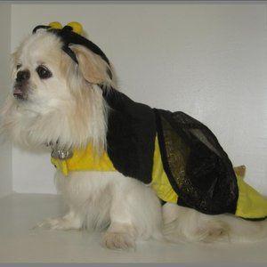 Bumble Bee Pet Costume (No Head Piece & No Dog)